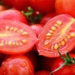 Tomota Seeds