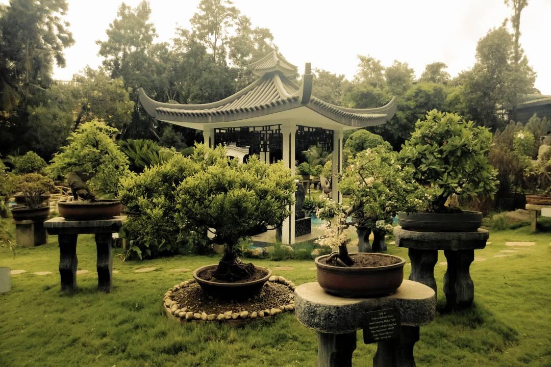 Kishkindha Moolika Bonsai Garden 4