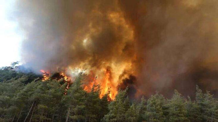 Turkey Wildfire Image