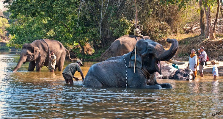Dubare Elephant Camp Coorg Tourism Opening Time Closing