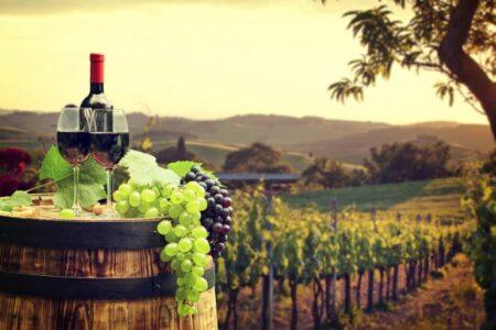Vallonne Vineyard 1