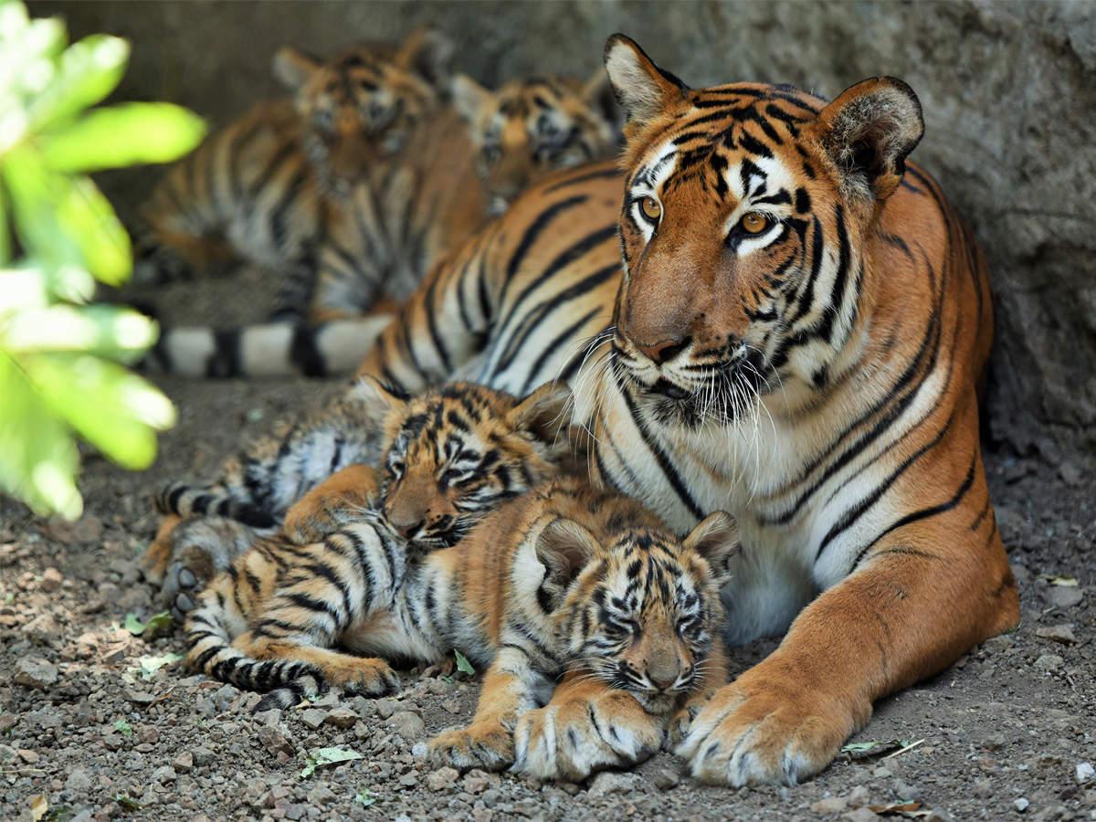 Rajiv Gandhi Zoological Park 3